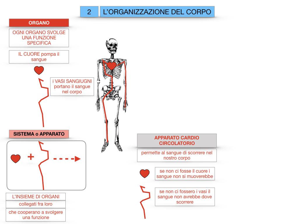 1.SCIENZE_IL CORPO UMANO_SIMULAZIONE.070