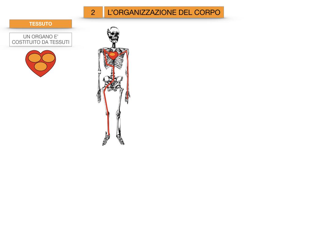 1.SCIENZE_IL CORPO UMANO_SIMULAZIONE.072