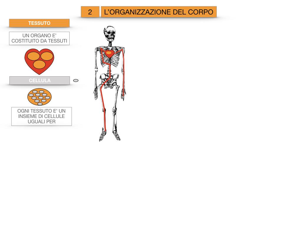 1.SCIENZE_IL CORPO UMANO_SIMULAZIONE.073