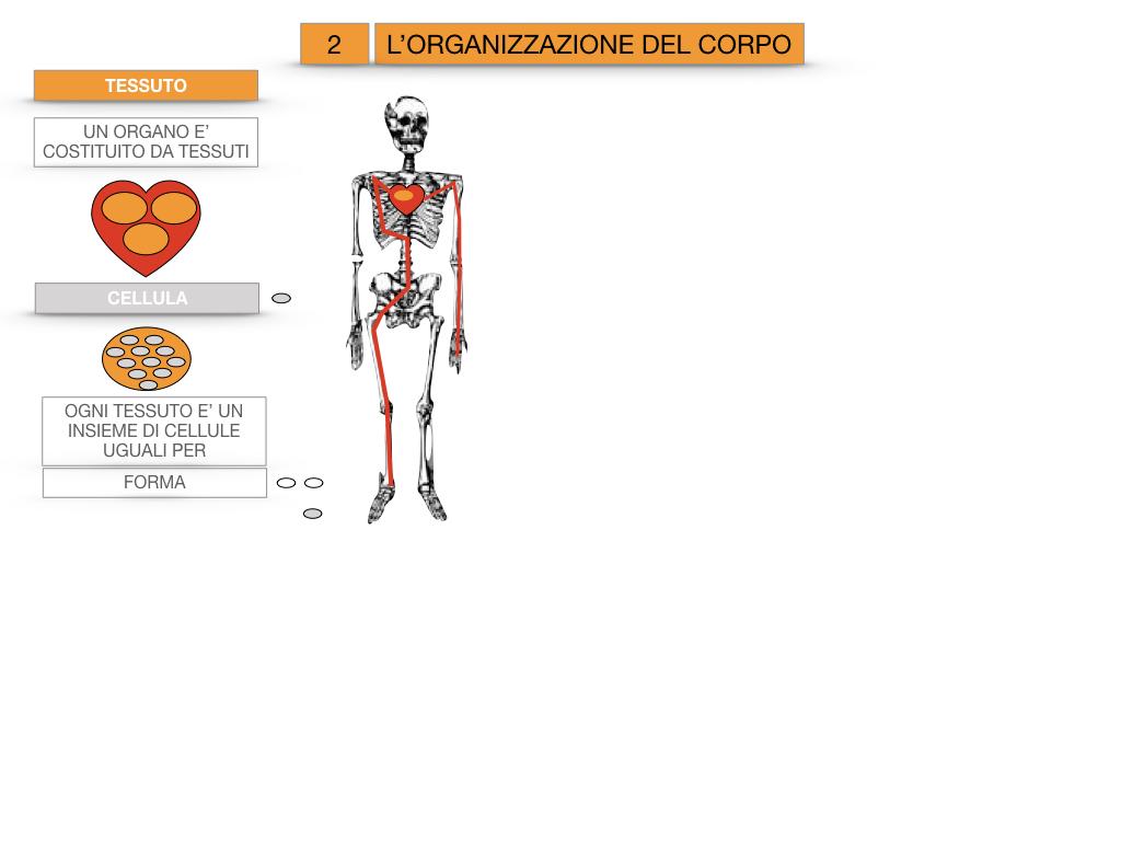 1.SCIENZE_IL CORPO UMANO_SIMULAZIONE.074
