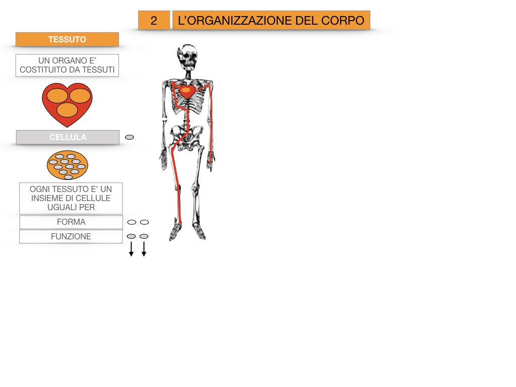 1.SCIENZE_IL CORPO UMANO_SIMULAZIONE.075