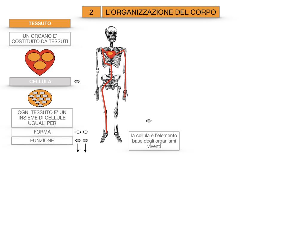 1.SCIENZE_IL CORPO UMANO_SIMULAZIONE.076