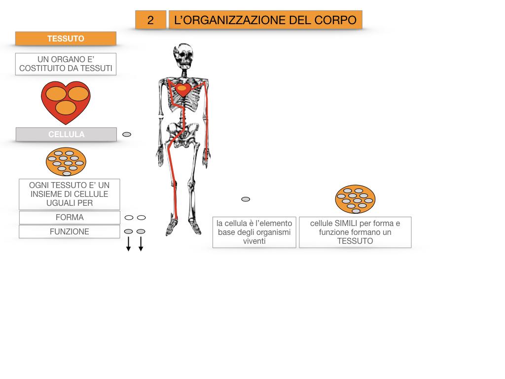 1.SCIENZE_IL CORPO UMANO_SIMULAZIONE.077