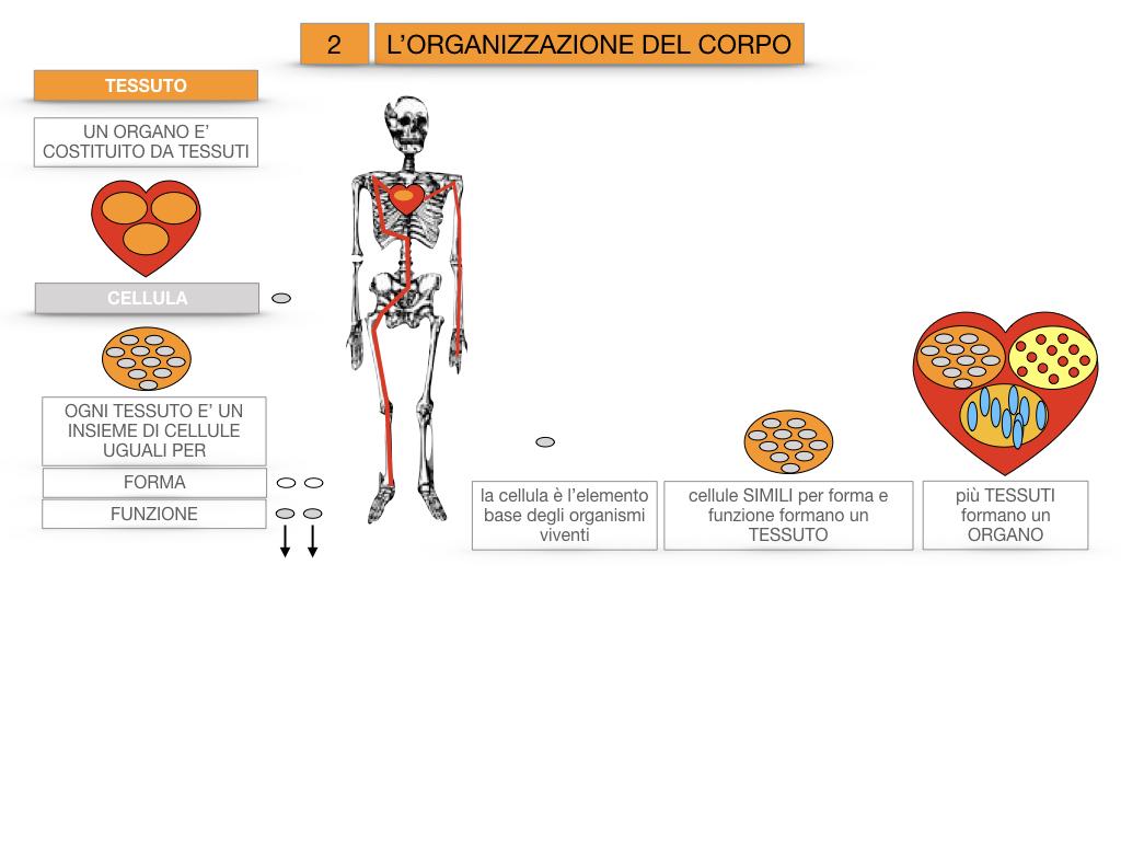 1.SCIENZE_IL CORPO UMANO_SIMULAZIONE.078
