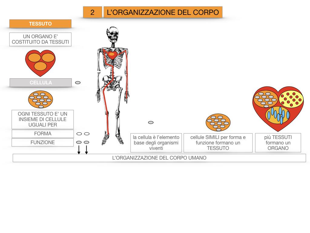1.SCIENZE_IL CORPO UMANO_SIMULAZIONE.079