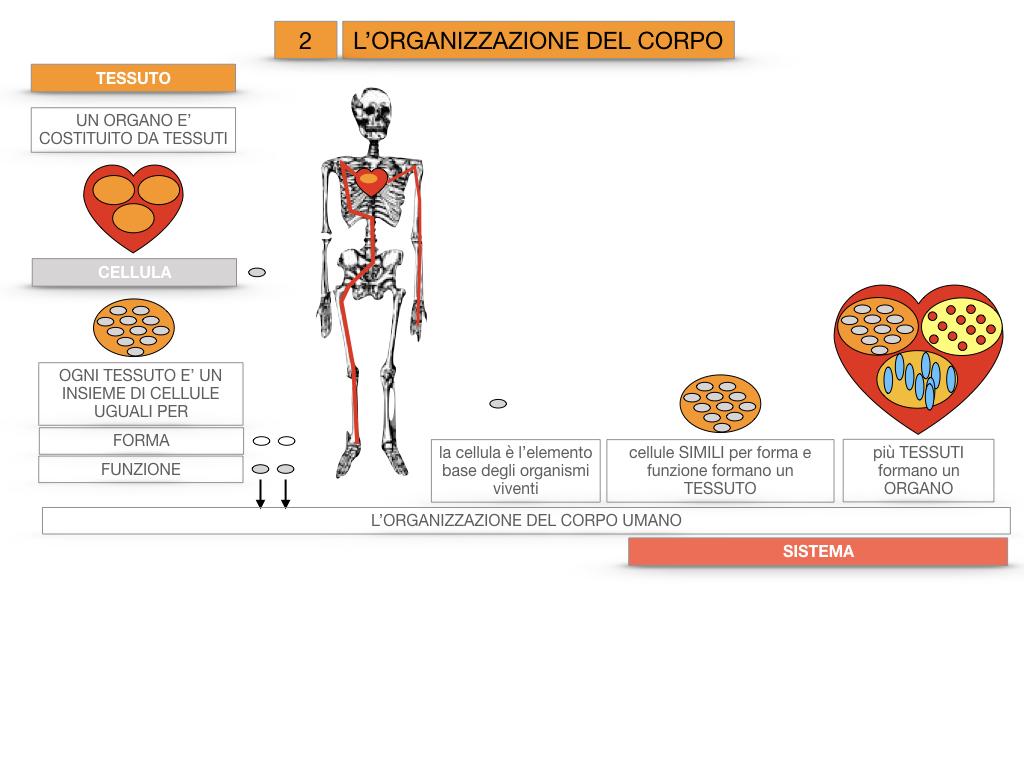 1.SCIENZE_IL CORPO UMANO_SIMULAZIONE.080