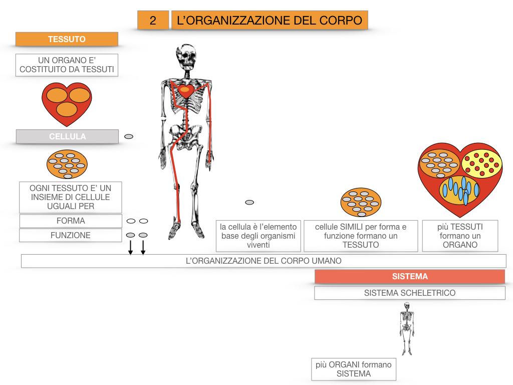 1.SCIENZE_IL CORPO UMANO_SIMULAZIONE.082