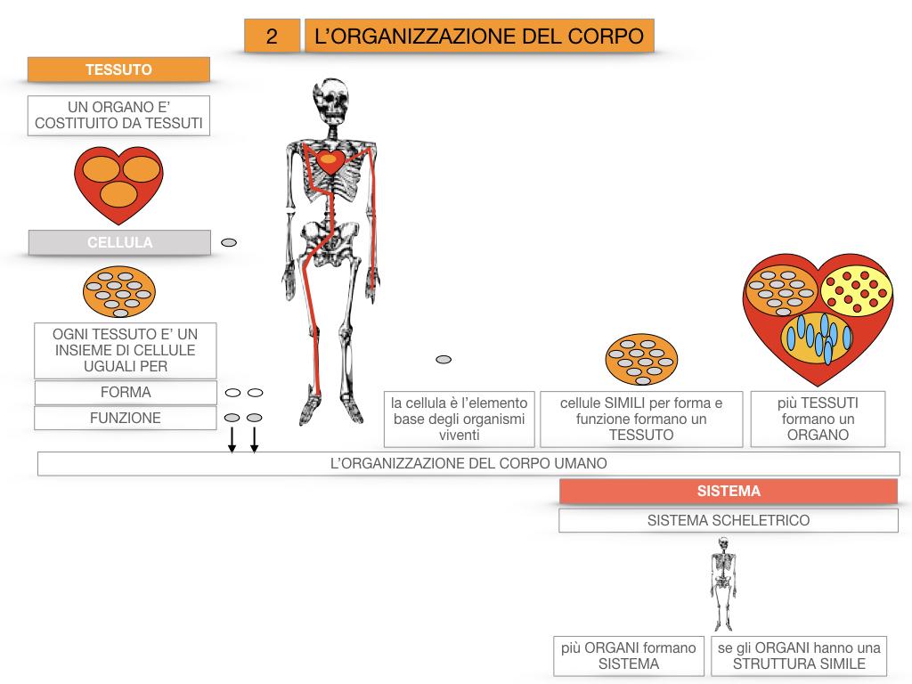 1.SCIENZE_IL CORPO UMANO_SIMULAZIONE.083