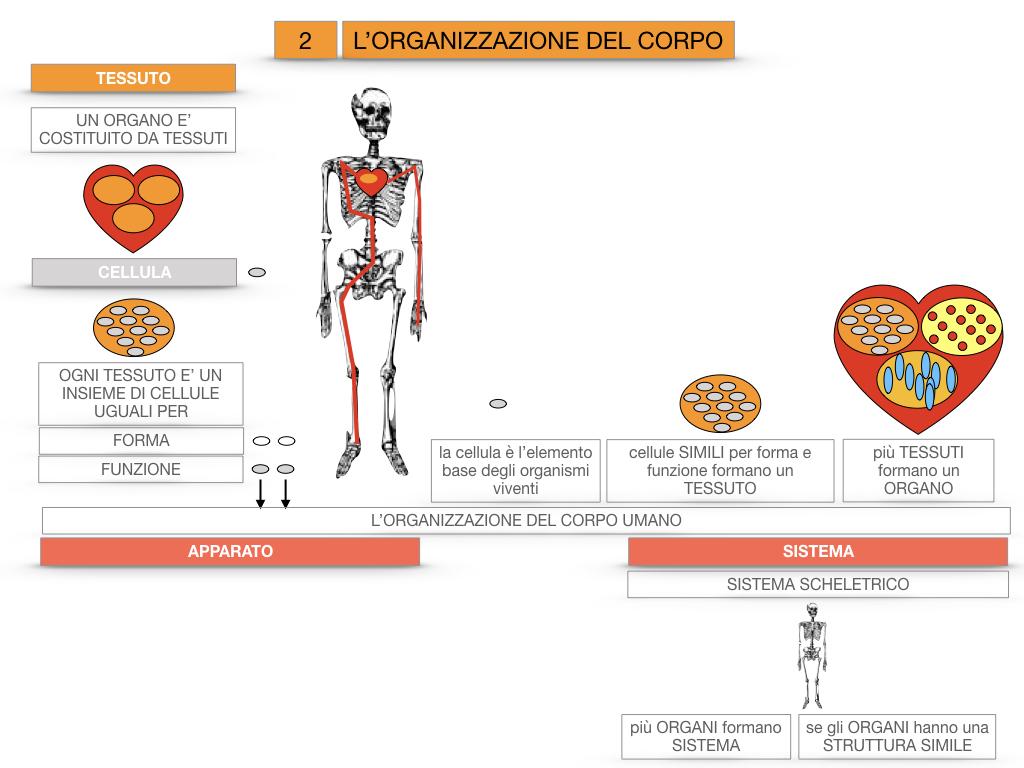 1.SCIENZE_IL CORPO UMANO_SIMULAZIONE.084