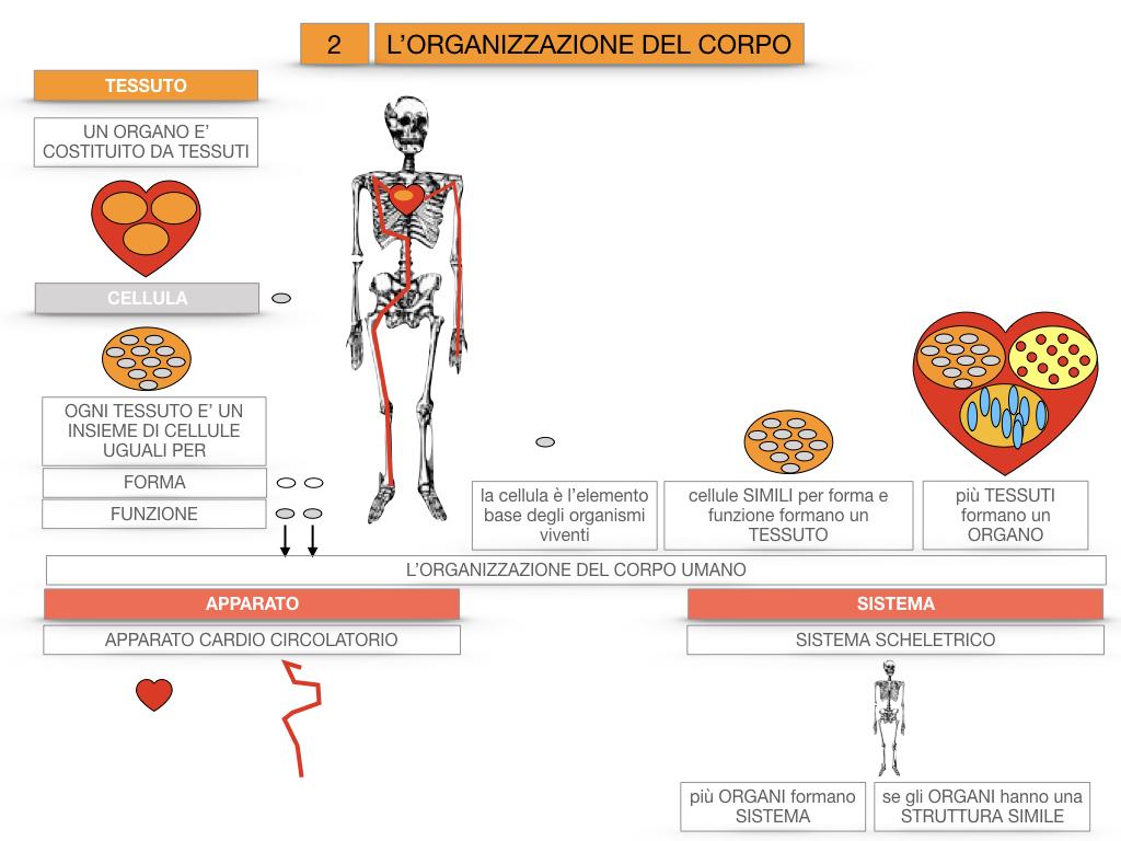 1.SCIENZE_IL CORPO UMANO_SIMULAZIONE.085