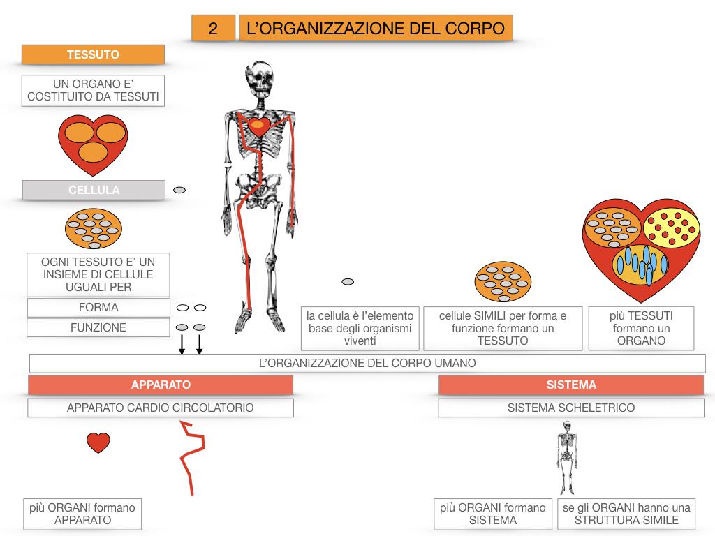 1.SCIENZE_IL CORPO UMANO_SIMULAZIONE.086
