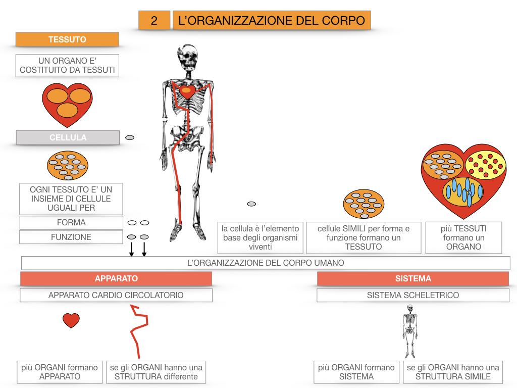 1.SCIENZE_IL CORPO UMANO_SIMULAZIONE.088