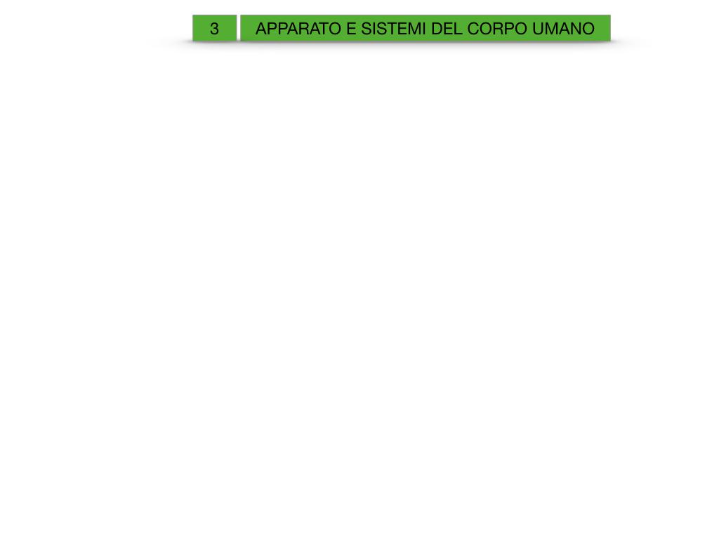 2. SCIENZE_APPARATI E SISTEMI_SIMULAZIONE.001