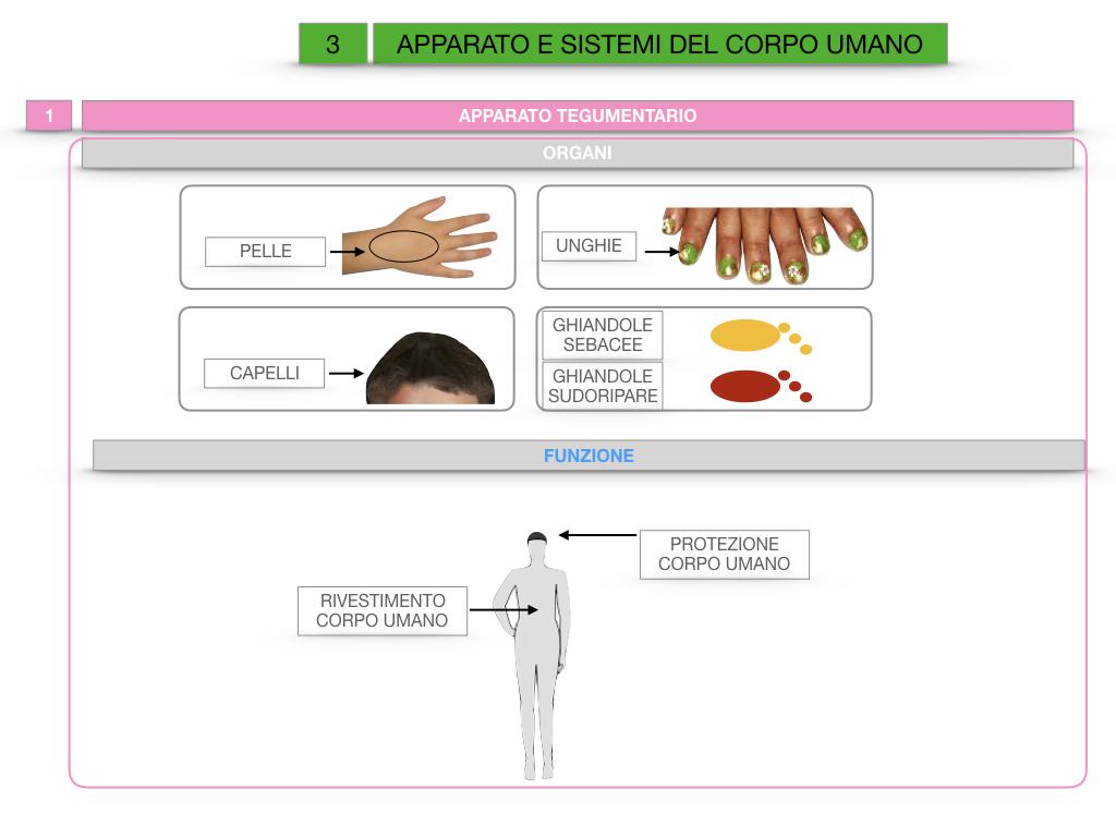 2. SCIENZE_APPARATI E SISTEMI_SIMULAZIONE.010
