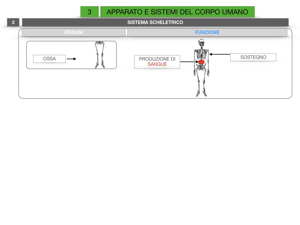 2. SCIENZE_APPARATI E SISTEMI_SIMULAZIONE.015
