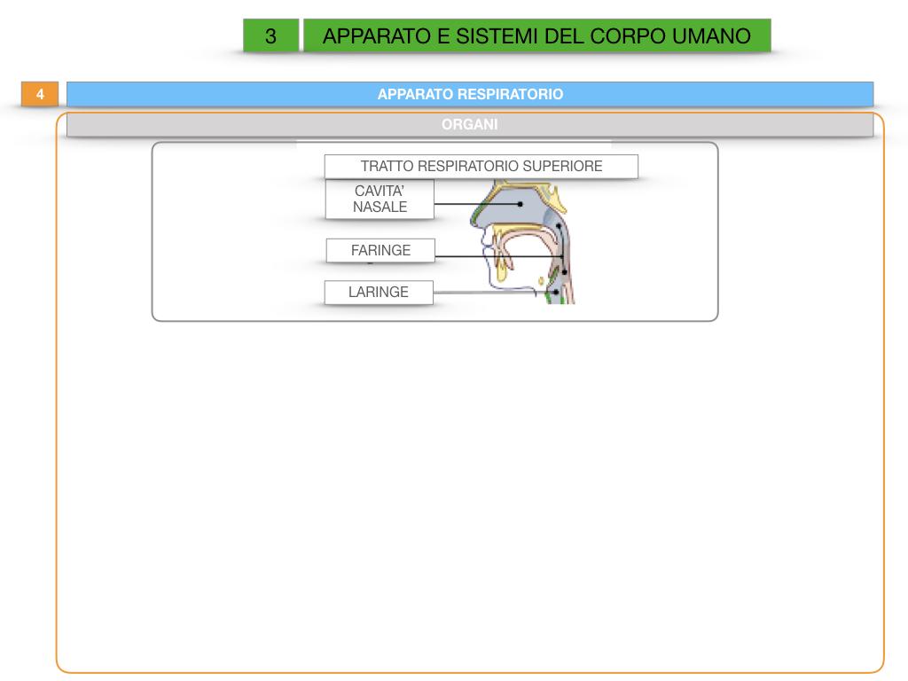 2. SCIENZE_APPARATI E SISTEMI_SIMULAZIONE.032