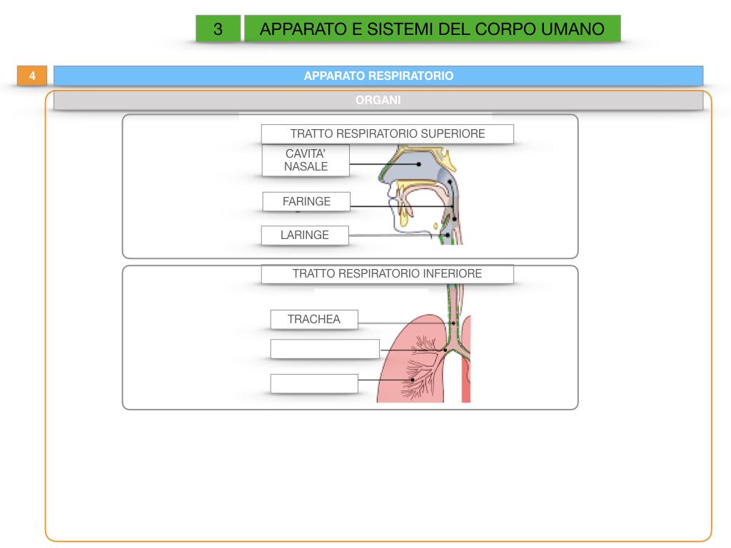 2. SCIENZE_APPARATI E SISTEMI_SIMULAZIONE.034
