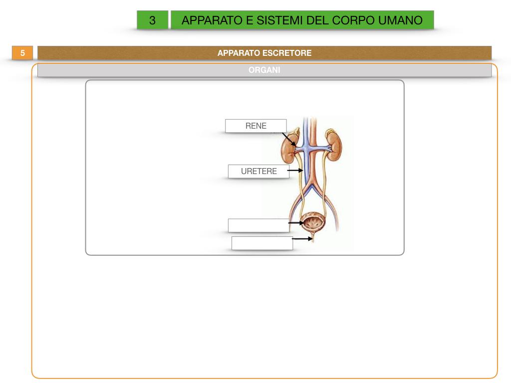 2. SCIENZE_APPARATI E SISTEMI_SIMULAZIONE.044