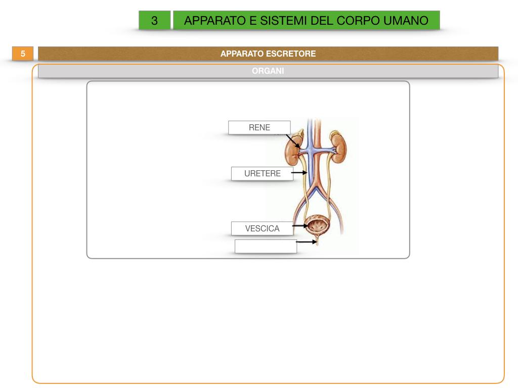 2. SCIENZE_APPARATI E SISTEMI_SIMULAZIONE.045