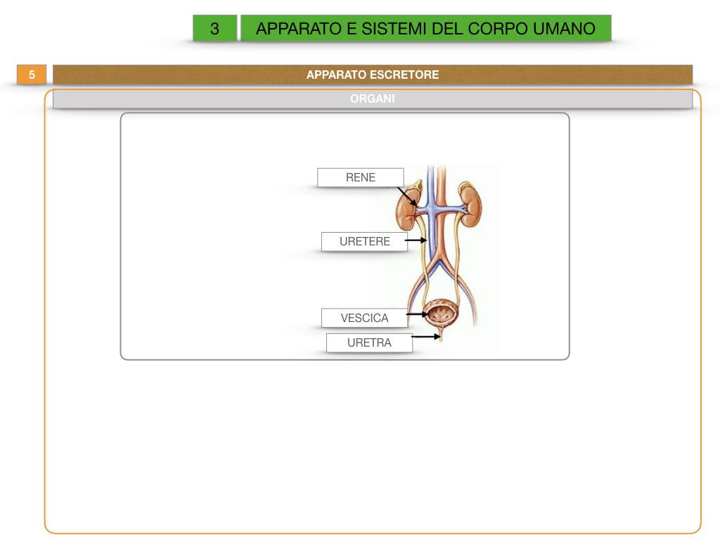 2. SCIENZE_APPARATI E SISTEMI_SIMULAZIONE.046