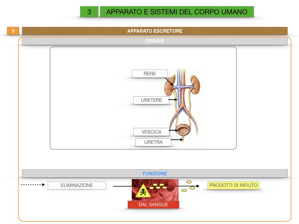 2. SCIENZE_APPARATI E SISTEMI_SIMULAZIONE.050