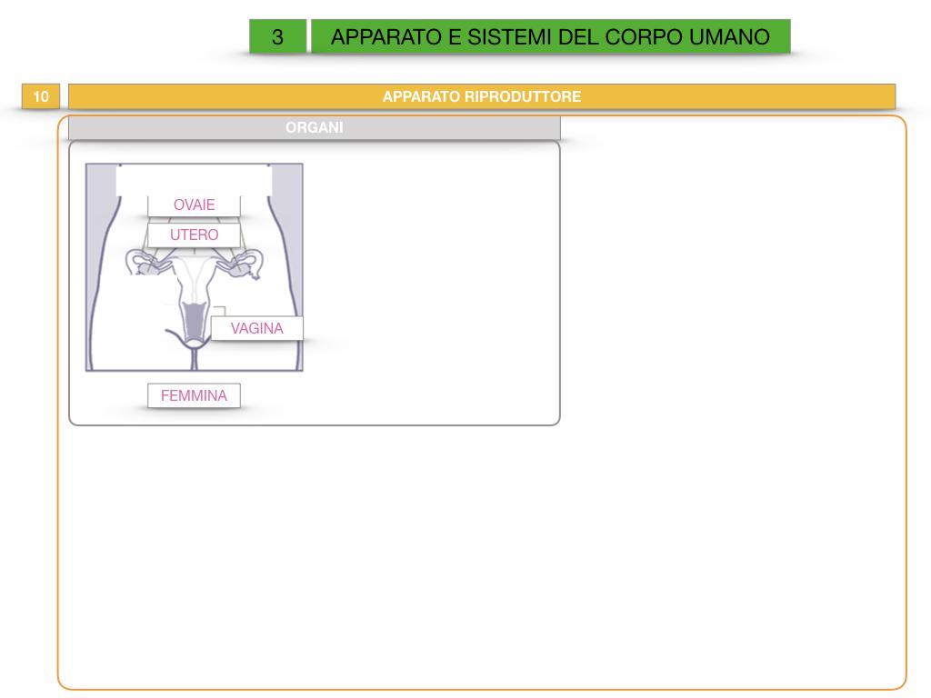 2. SCIENZE_APPARATI E SISTEMI_SIMULAZIONE.085