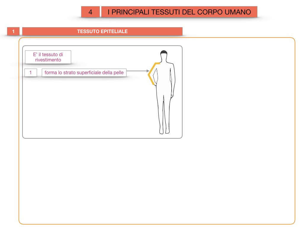 3. SCIENZE_I PRINCIPALI TESSUTI_SIMULAZIONE.004