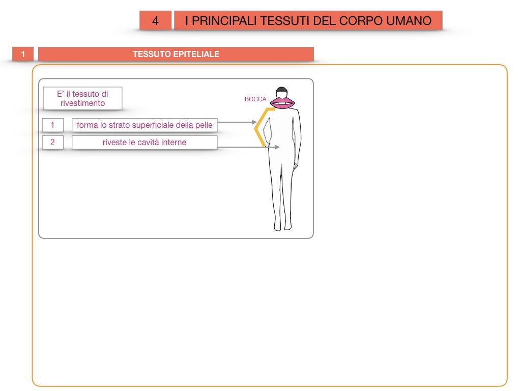 3. SCIENZE_I PRINCIPALI TESSUTI_SIMULAZIONE.006