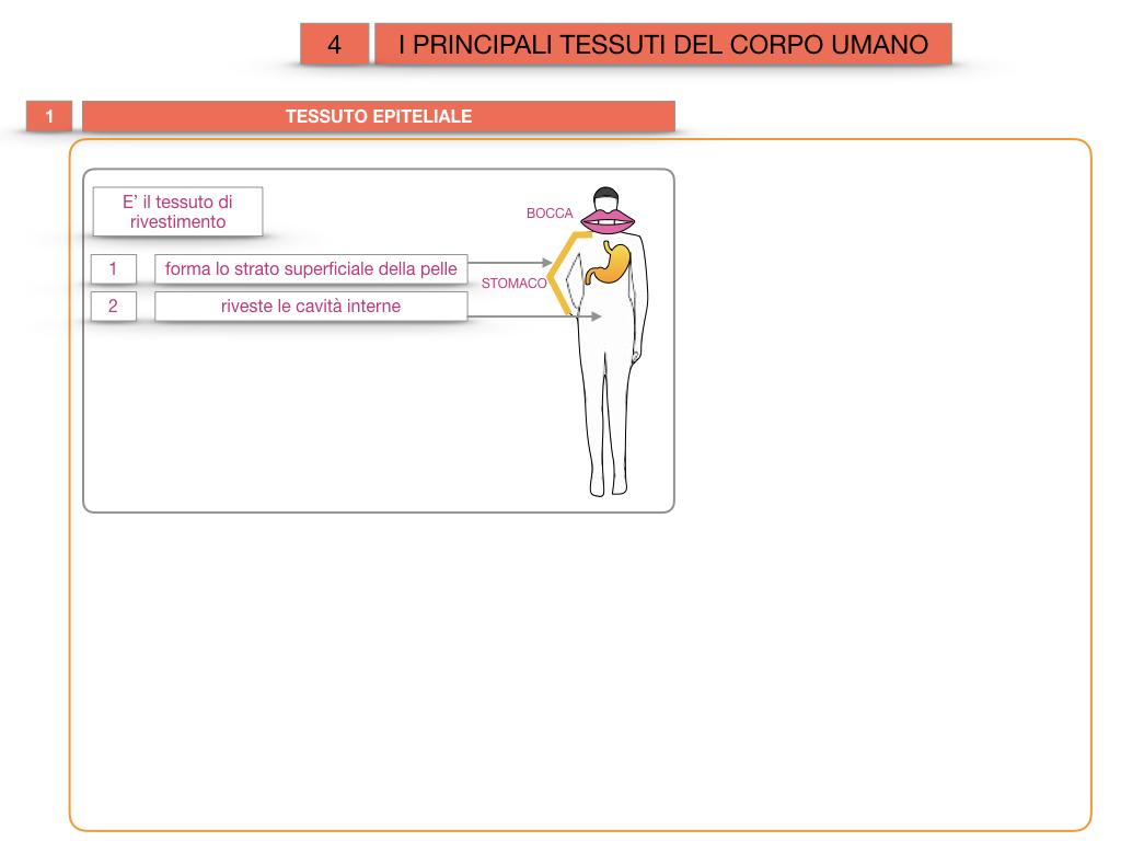 3. SCIENZE_I PRINCIPALI TESSUTI_SIMULAZIONE.007