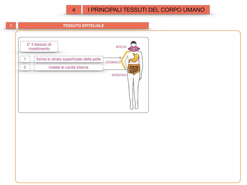 3. SCIENZE_I PRINCIPALI TESSUTI_SIMULAZIONE.008
