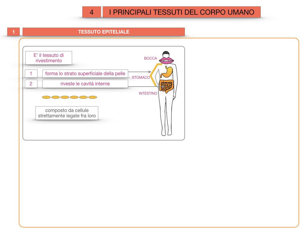 3. SCIENZE_I PRINCIPALI TESSUTI_SIMULAZIONE.009