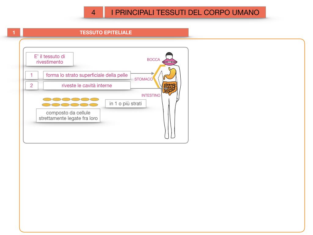 3. SCIENZE_I PRINCIPALI TESSUTI_SIMULAZIONE.010