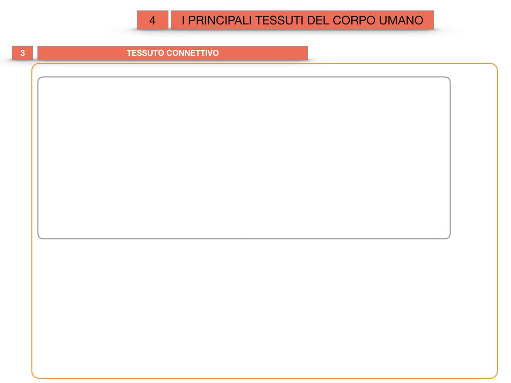 3. SCIENZE_I PRINCIPALI TESSUTI_SIMULAZIONE.017