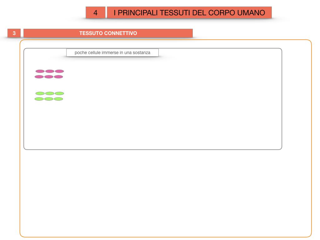 3. SCIENZE_I PRINCIPALI TESSUTI_SIMULAZIONE.018