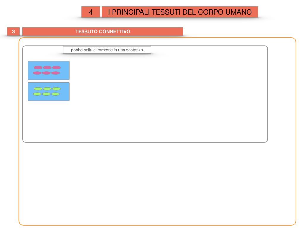 3. SCIENZE_I PRINCIPALI TESSUTI_SIMULAZIONE.019