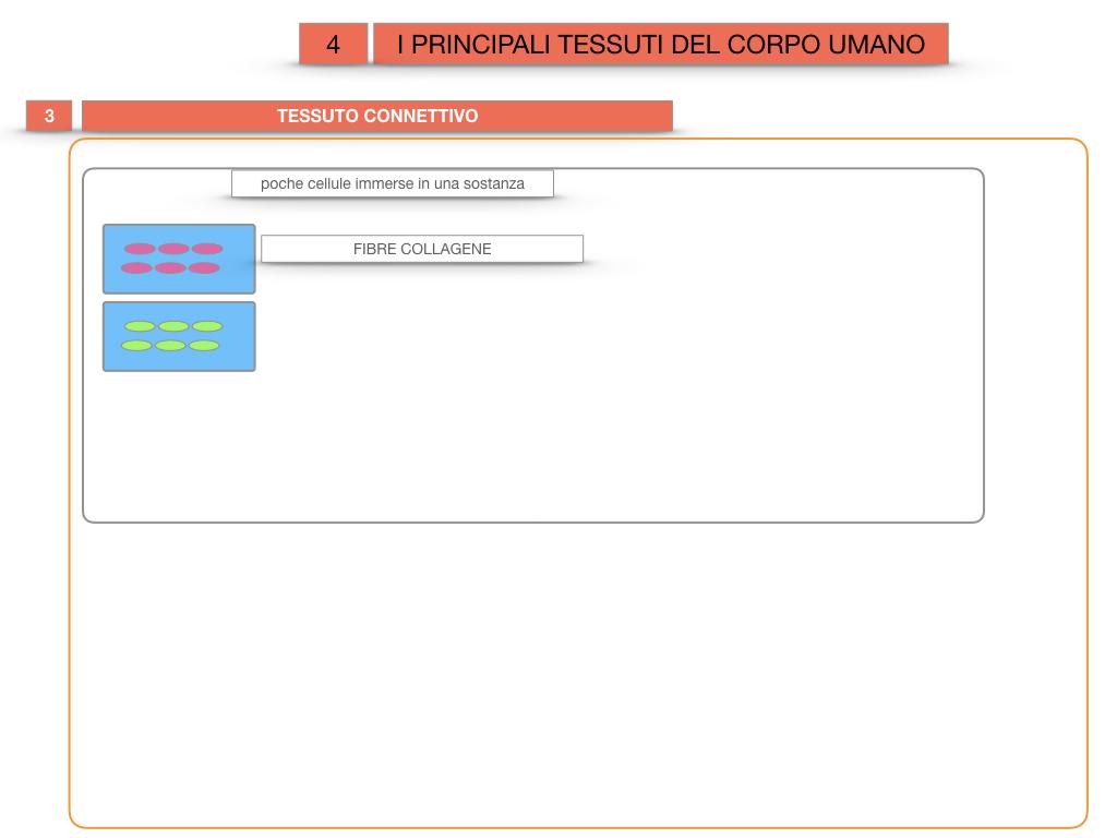 3. SCIENZE_I PRINCIPALI TESSUTI_SIMULAZIONE.020