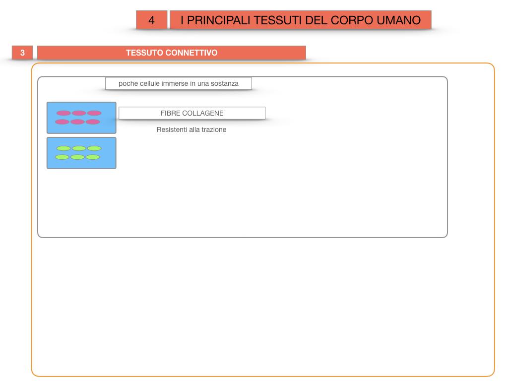 3. SCIENZE_I PRINCIPALI TESSUTI_SIMULAZIONE.021