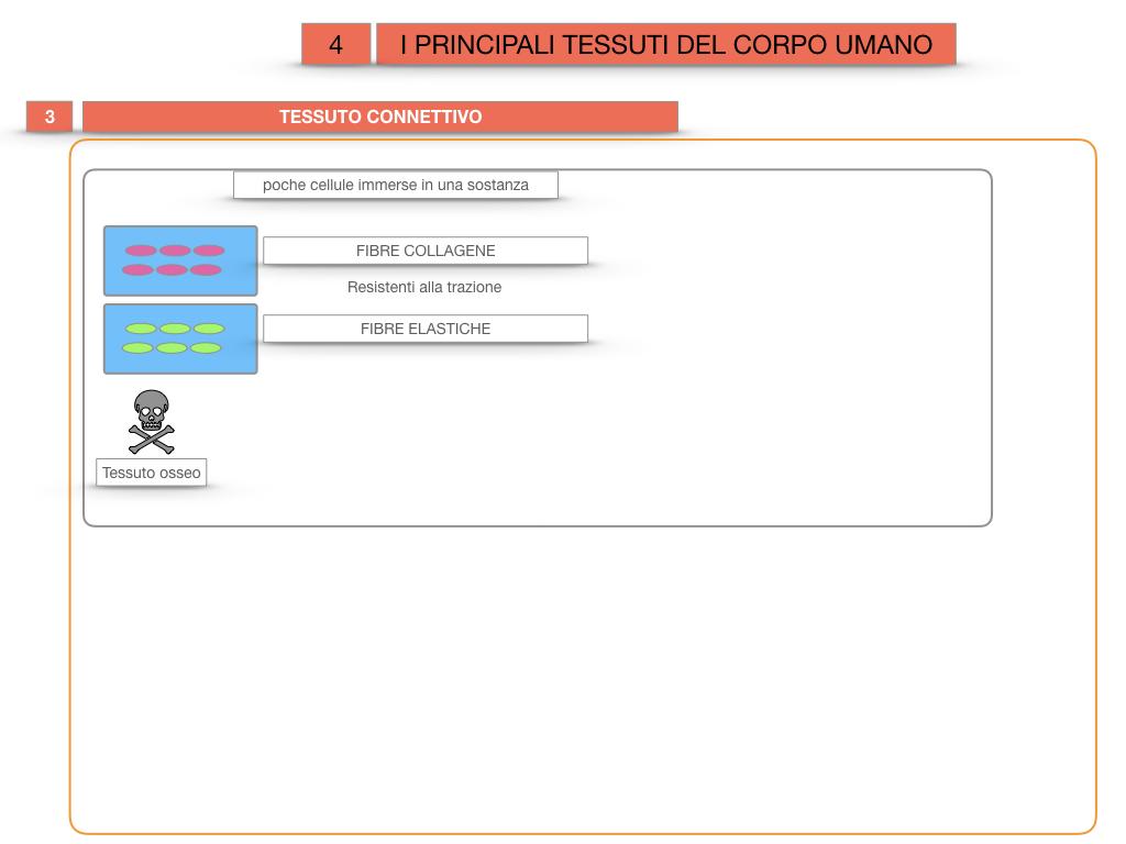 3. SCIENZE_I PRINCIPALI TESSUTI_SIMULAZIONE.023