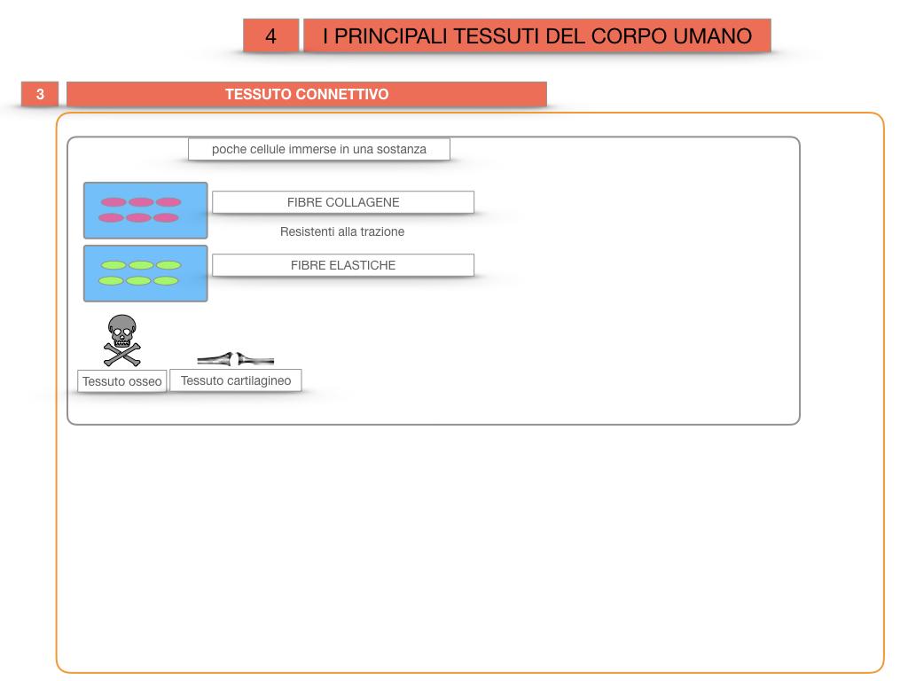3. SCIENZE_I PRINCIPALI TESSUTI_SIMULAZIONE.024