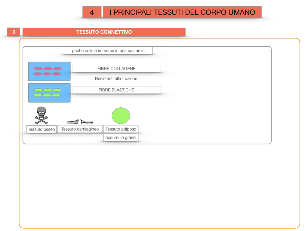 3. SCIENZE_I PRINCIPALI TESSUTI_SIMULAZIONE.025