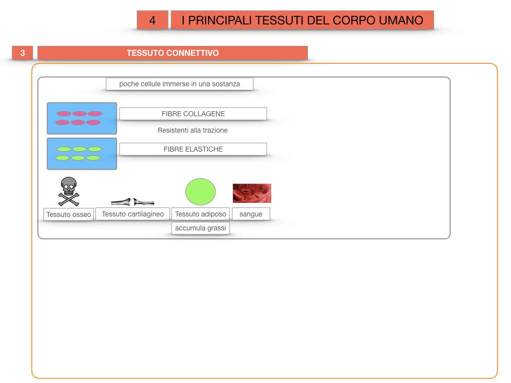 3. SCIENZE_I PRINCIPALI TESSUTI_SIMULAZIONE.026