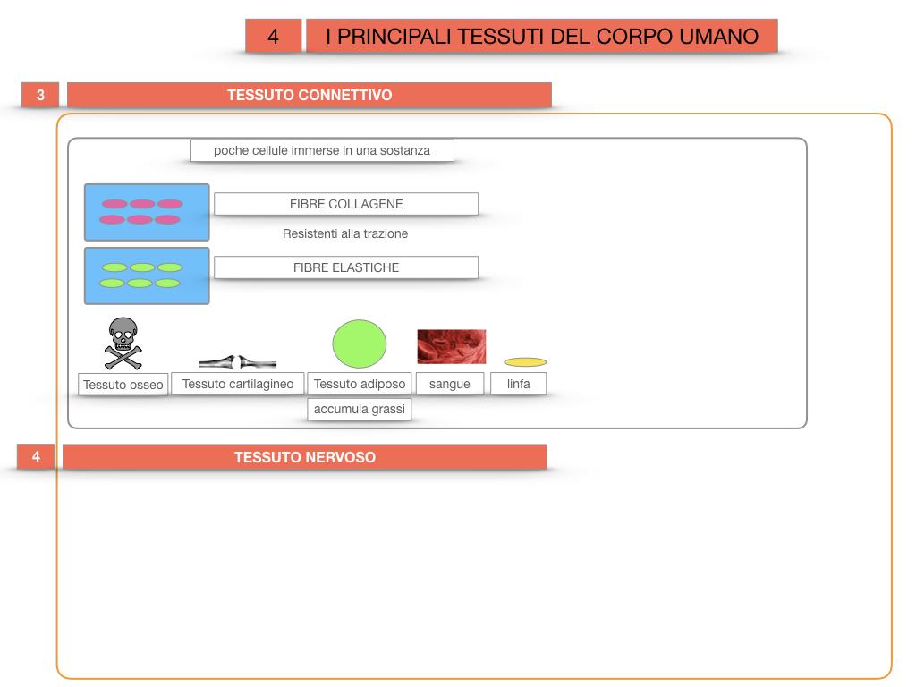 3. SCIENZE_I PRINCIPALI TESSUTI_SIMULAZIONE.028