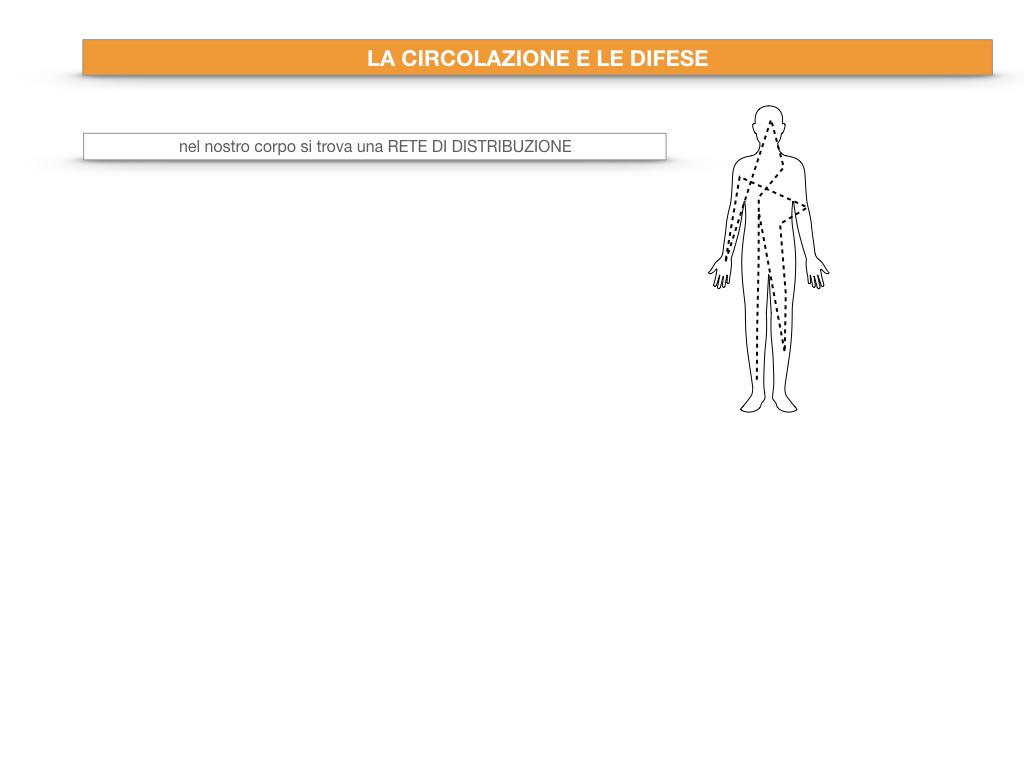13. CIRCOLAZIONE E DIFESE_SIMULAZIONE.004