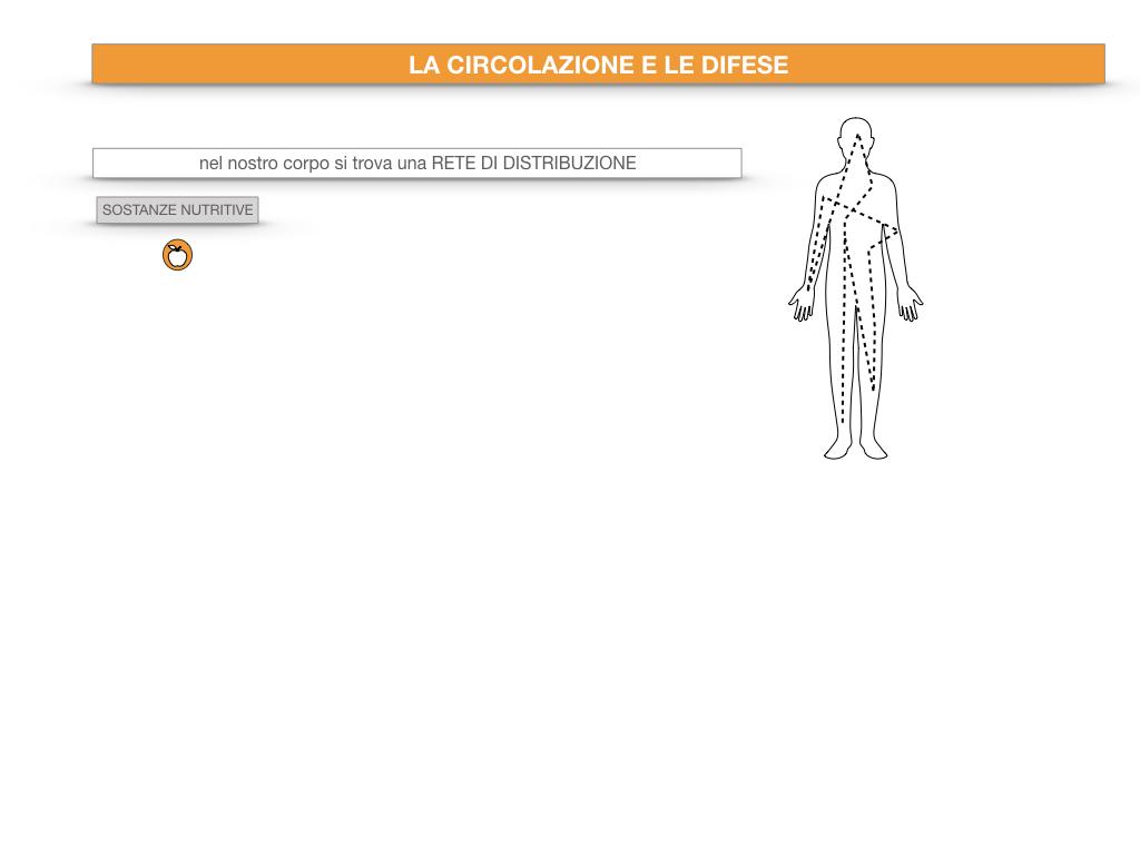 13. CIRCOLAZIONE E DIFESE_SIMULAZIONE.005