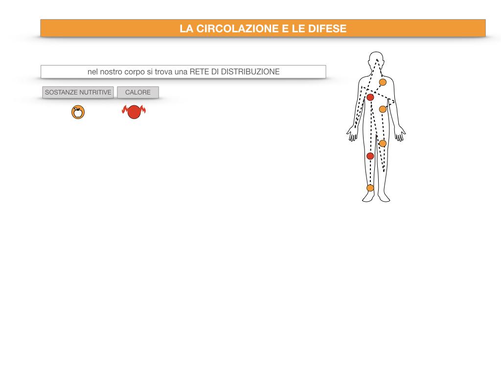 13. CIRCOLAZIONE E DIFESE_SIMULAZIONE.008