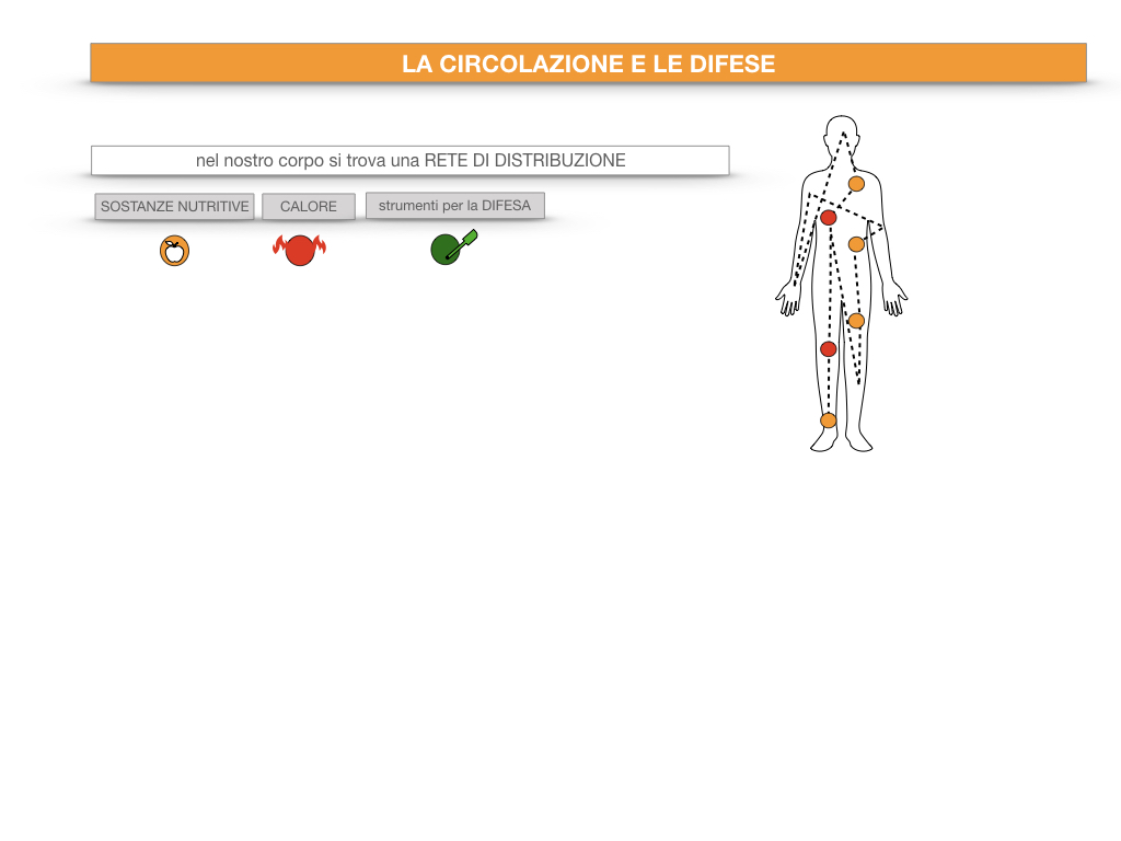 13. CIRCOLAZIONE E DIFESE_SIMULAZIONE.009