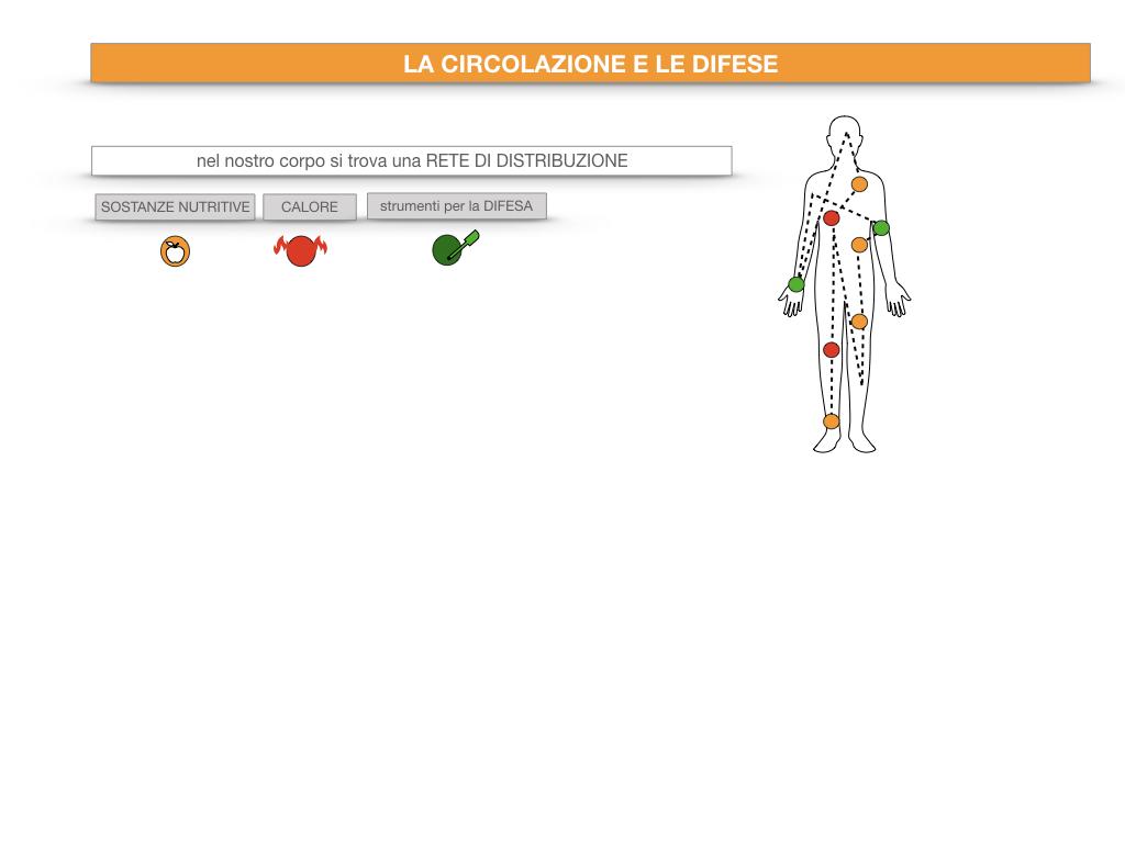 13. CIRCOLAZIONE E DIFESE_SIMULAZIONE.010