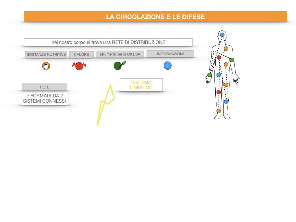 13. CIRCOLAZIONE E DIFESE_SIMULAZIONE.014