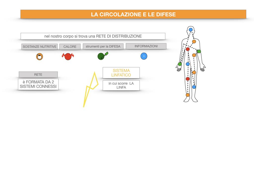 13. CIRCOLAZIONE E DIFESE_SIMULAZIONE.015