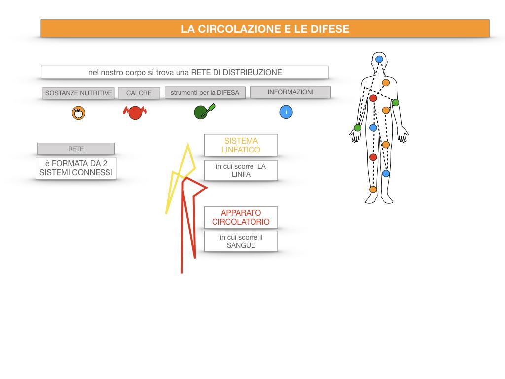 13. CIRCOLAZIONE E DIFESE_SIMULAZIONE.017